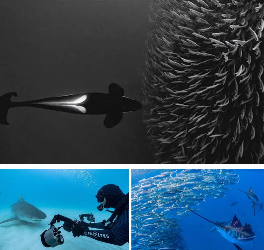 Paul Nicklen Pictures